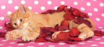 Yellow Kitten And Pink Polka Dots Stock Photos
