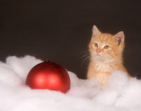 Yellow kitten in fluffy snow Stock Photo