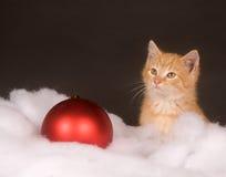 Yellow kitten in fluffy snow Stock Photo