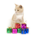 Yellow kitten and gifts royalty free stock image