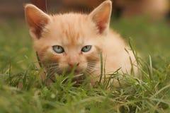 Yellow kitten Stock Photos