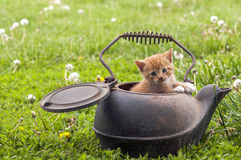 kitten in kettle Royalty Free Stock Photos