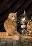 Yellow kitten. A little yellow cat standing backward on yellow wicker chest and turning his head toward the camera, a bedside lamp and some dried flowers beside royalty free stock photo