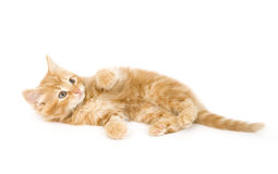 Yellow kitten playing stock photos