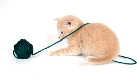 Yellow Kitten Playing With Yarn Stock Images