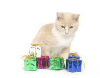 Yellow kitten and presents Stock Photo