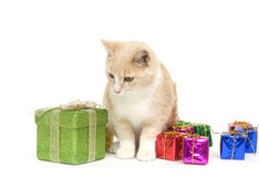 Yellow kitten and presents Royalty Free Stock Photos