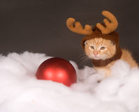Yellow kitten with reindeer hat Stock Photos