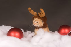 Yellow kitten with reindeer hat Stock Images