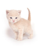 Yellow kitten standing on white Stock Photo