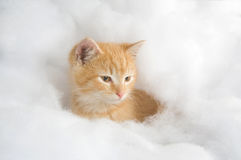 Yellow kitten surrounded by fake snow Stock Image