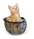 Yellow kitten in wire basket Stock Photos
