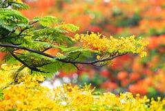 ํYellow kwiaty Zdjęcia Royalty Free
