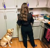 A yellow lab begging her owner for food in the kitchen during dinner. She is sitting right beside the woman, pleading with her ey. Es stock images