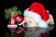 Adorable labrador puppy sleeping in a santa hat stock image