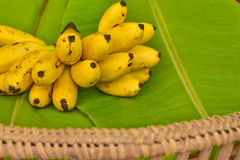 Yellow lady finger bananas put on green banana leaf, kluay-khai, Royalty Free Stock Image