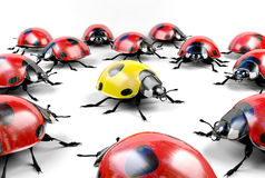 Yellow ladybug among group of red ladybugs Royalty Free Stock Photography