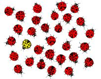 Yellow ladybug in the middle of a crowd of the red ones Stock Photos