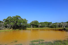 Yellow lake under blue sky Royalty Free Stock Photo