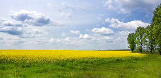 Yellow landscape. With some tree around Royalty Free Stock Image