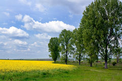 Yellow landscape. With some tree around Royalty Free Stock Photos