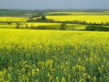 Yellow Landscape Stock Photos