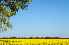 Yellow landscape Stock Images
