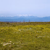 Yellow landscape with snowy mountain Stock Photos