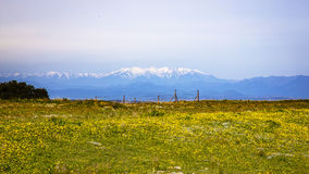 Yellow landscape with snowy mountain Royalty Free Stock Photo