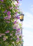 Yellow lantern behind a blossoming lilac stock images
