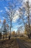 Yellow larch and birch trees illuminated by the sun in the autum royalty free stock images