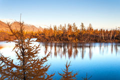 Yellow larch on a blue lake in the tundra, deep autumn in the Taimyr Peninsula near Norilsk. Stock Photography