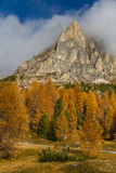 Yellow Larches and Dolomites-Passo Falzarego,Italy Royalty Free Stock Photography