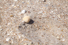 Yellow large shell on a sandy beach Royalty Free Stock Images