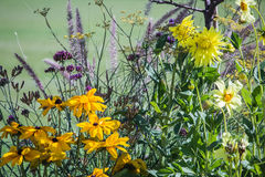Yellow and lavender flowers in the Jardin de Luxembourg, Paris Royalty Free Stock Images