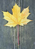 Yellow leaf. On a pice of wood Stock Image