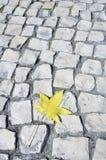 Yellow leaf Royalty Free Stock Photos