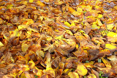 Yellow leaf. Nature color autumn image royalty free stock image