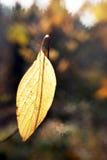 Yellow leaf Royalty Free Stock Photo