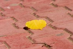 Yellow Leaf. On red tiles Royalty Free Stock Images