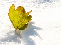 Yellow Leaf. Closeup shot of a yellow leaf in the snow stock image