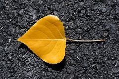 Yellow leaf. A yellow leaf on asphalt Stock Images