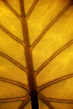 Yellow leaf. Detail, closeup view Royalty Free Stock Photos