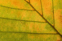 Yellow leaf. In autumn view closely Royalty Free Stock Photo