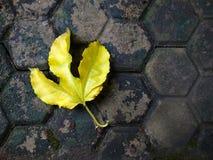 Yellow Leaf Stock Photo