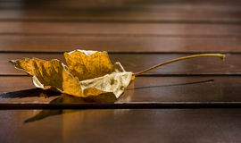 Yellow leaf in the autumn with a shallow dof Royalty Free Stock Images
