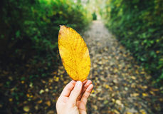 Yellow leaf on the background of autumn forest. Royalty Free Stock Photo