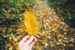 Yellow leaf on the background of autumn forest. Woman`s hand holds yellow leaf on the background of fallen leaves on the autumn forest trail Royalty Free Stock Images
