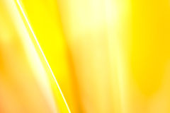 Yellow leaf background Royalty Free Stock Photography