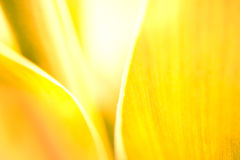 Yellow leaf background Stock Photos